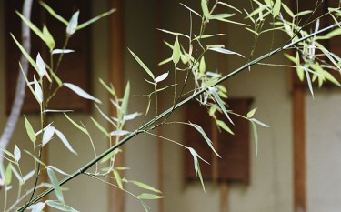 Colloque: ''Le Zen et les arts: pratique, thé, peinture et poésie''